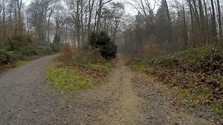 Jahresende 2018 - Waldlauf