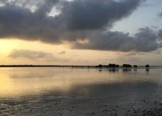 Sonnenaufgang Sansibar - Mangroven