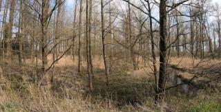 Wald Frühjahr 2019