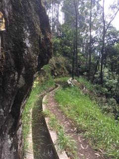 Levada Nova (Madeira) Mai 2017